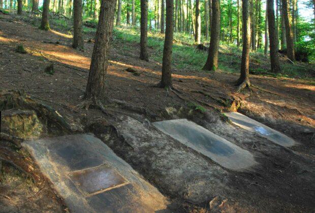 Dead Wood / Bois Mort